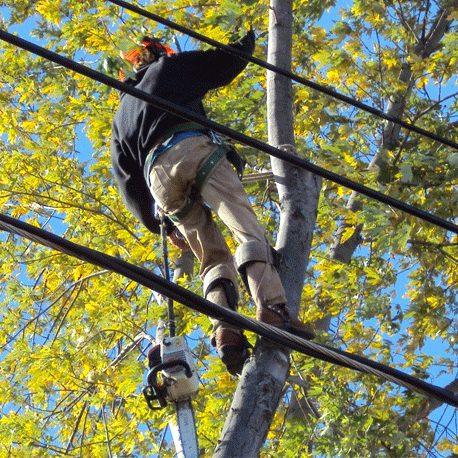 Waiheke Arborists treecare web.jpg