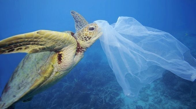 Turtle plastic bag