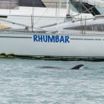 dolphins at Kennedy Point RD 2016
