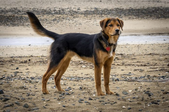 Proposed changes to dog rules