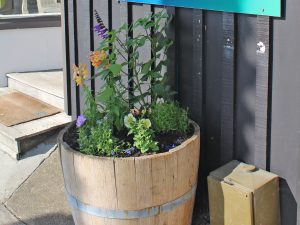 New barrel gardens in Oneroa